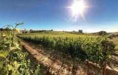 Ferienhaus 109229 für 4 Personen in Montaione