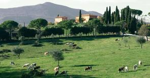 Mieszkanie wakacyjne 1191036 dla 8 osób w Citta della Pieve