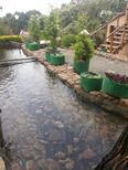 Maison de vacances 1245596 pour 2 personnes , Munnar