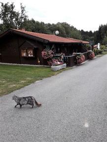 Villa 743440 per 4 persone in Eppenschlag
