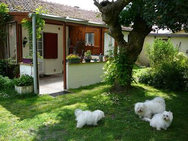 Holiday apartment 871219 for 2 persons in Parentis-en-Born